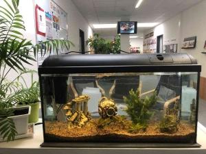 Eingerichtetes Aquarium mit den neuen Bewohnern